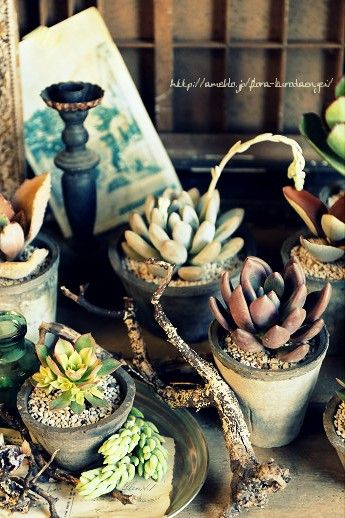 The various succulent