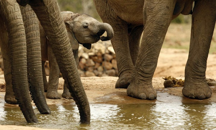 A herd of elephants stands together at the Addo Elephant National Park outside Port Elizabeth, South Africa.