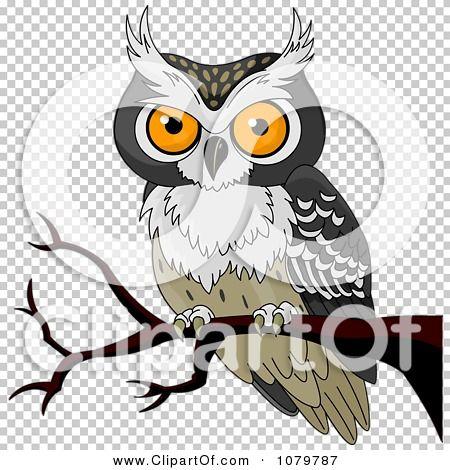 Owls owl tawny owl