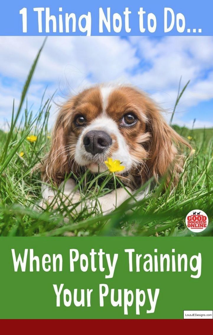 How To Train Your Dog To Come Here And Pics Of Best Way To Train