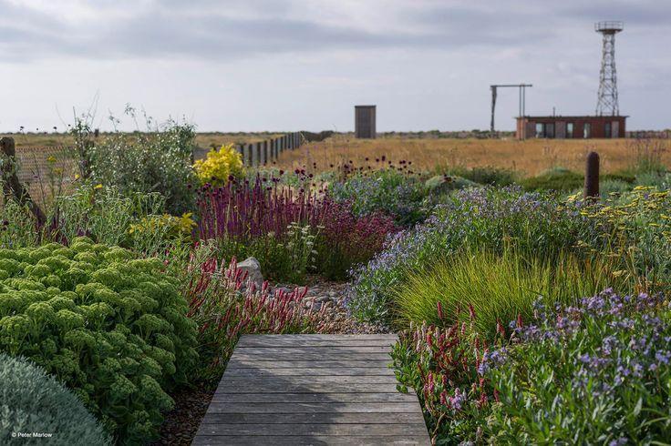 17 meilleures images propos de plantes pour talus sur pinterest jardins cendre et planters. Black Bedroom Furniture Sets. Home Design Ideas