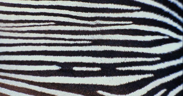 Como decorar uma festa de aniversário inspirada nas zebras. Solte suas feras com uma festa de aniversário temática inspirada nas zebras. Traga a selva para sua casa usando acessórios com detalhes de estampa de zebra, ou vá além e abrace a temática, desde os convites até os copos. Divirta-se com seu tema e misture-o com outras cores que complementam a estampa selvagem. Por exemplo, rosa-choque e estampa de ...