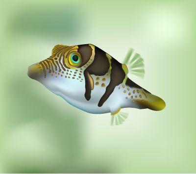ilustración vectorial en illustrator - pez cofre
