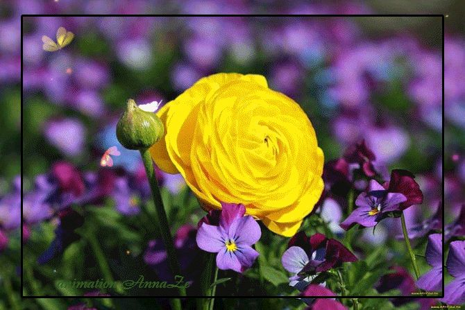 Godna Księga Obrazek: animowane Roses 4
