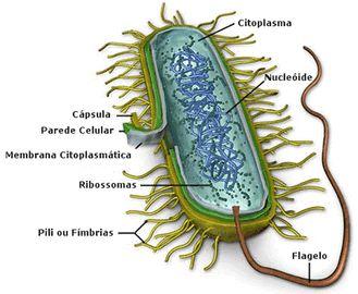 .:: Características Gerais dos Seres Vivos - Só Biologia ::.