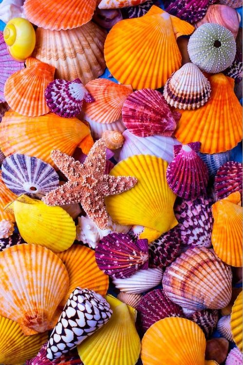 seashells // purple // orange // yellow