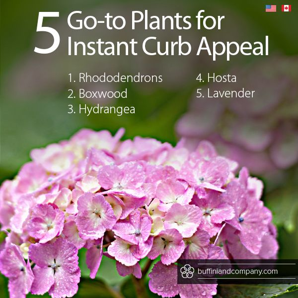 5 Plants To Add Instant Curb Appeal From This Month 39 S