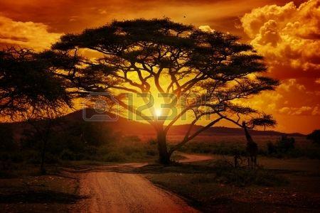 Africa Sunset Stock Photo