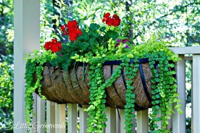best plants for hanging baskets, container gardening, flowers, gardening, porches