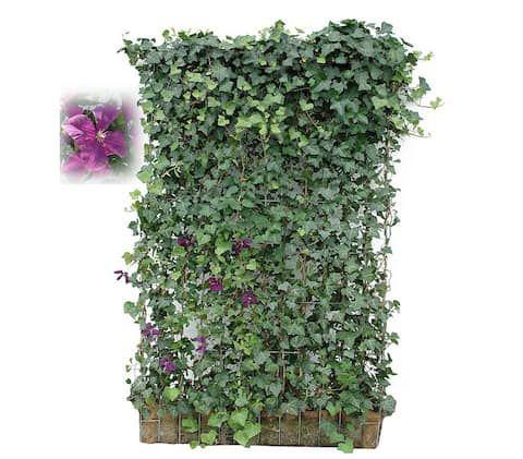 108 best images about garten on pinterest gardens. Black Bedroom Furniture Sets. Home Design Ideas