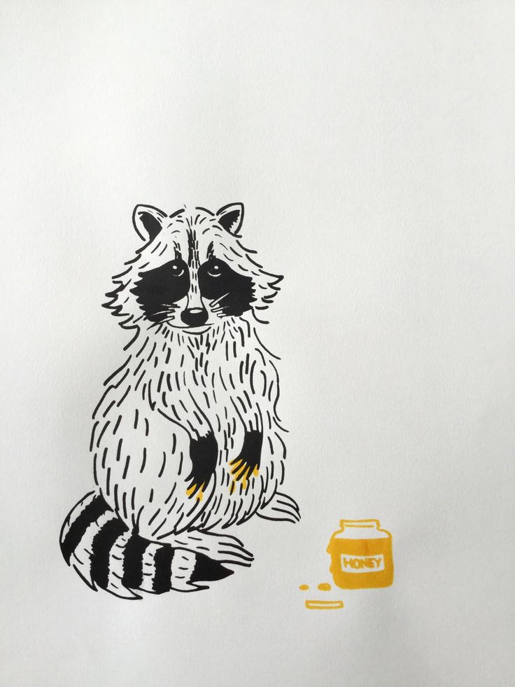 raccoon !