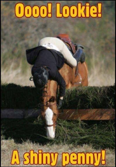 Lookie! A shiny penny! Horse jumping refusal fall cross country horseback riding fail