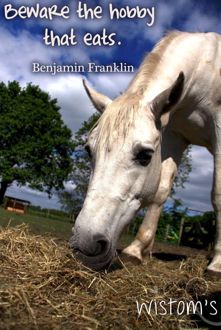 Horse Quotes For Facebook. QuotesGram