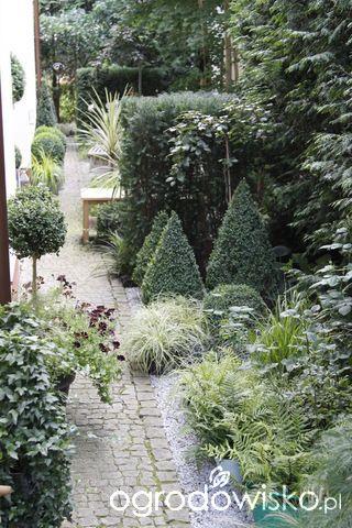 Ogród nie tylko bukszpanowy - część III - strona 22 - Forum ogrodnicze - Ogrodowisko