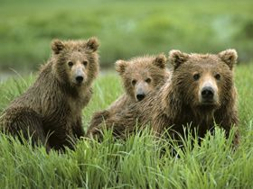 I SOOOO Want to see all of Alaska!  How crazy is it that I want to see the bears and the eagles and the glaciers!