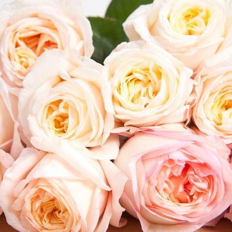 Картинки по запросу роза анджи романтика