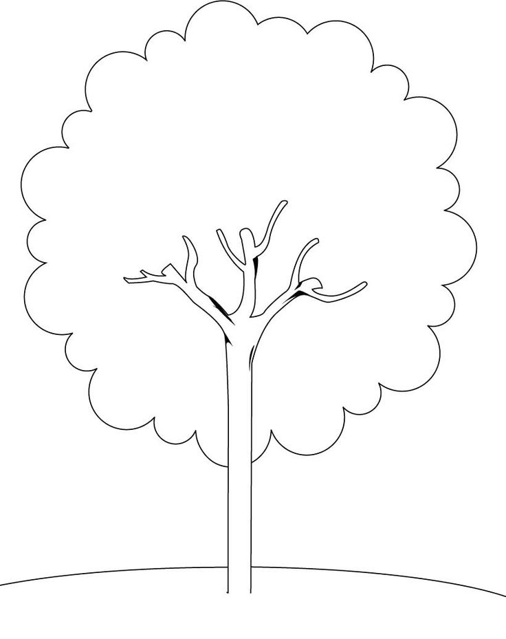 stem  small tree coloring pages printables pinterest