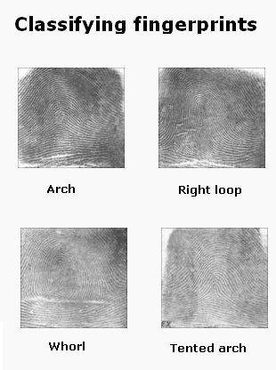 All About Fingerprints  **Super Sleuths**