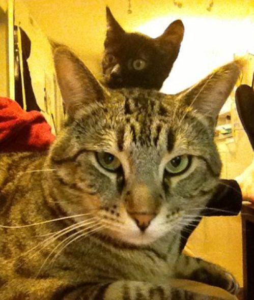 Best Animal Photobombs Images On Pinterest Best Photo Cool - 20 hilarious cat photobombs