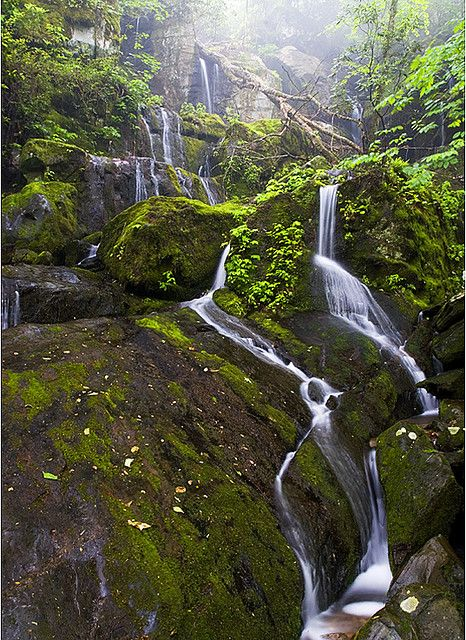 Roaring Forks Motor Trail (Place of a Thousand Drips), Great Smoky Mountains National Park, Gatlinburg, TN