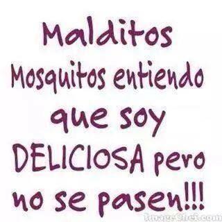 Mosquito: diminuto insecto toca cojones que o te pica o no te deja dormir. *