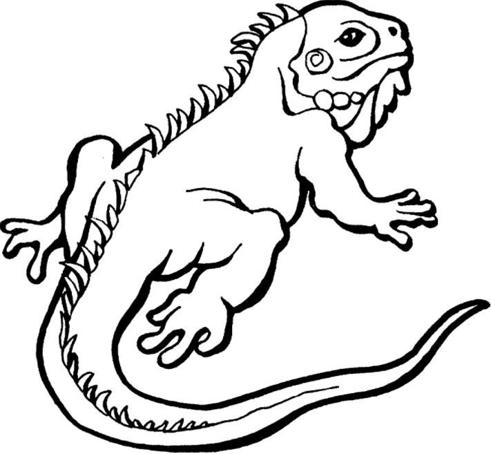 Iguana Coloring Page Animal Coloring Pages Turtle Coloring Pages Detailed Coloring Pages