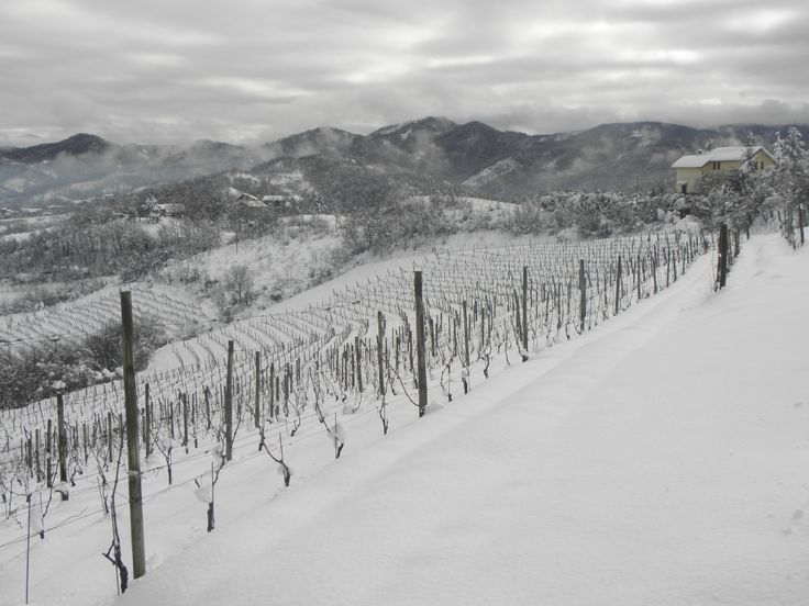 Sotto le neve pane...e vino! #vineyards