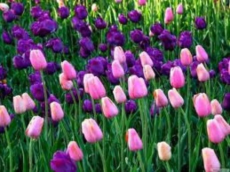 Ez egy CSAJOS oldal csak CSAJOKNAK - Képgaléria - virágok