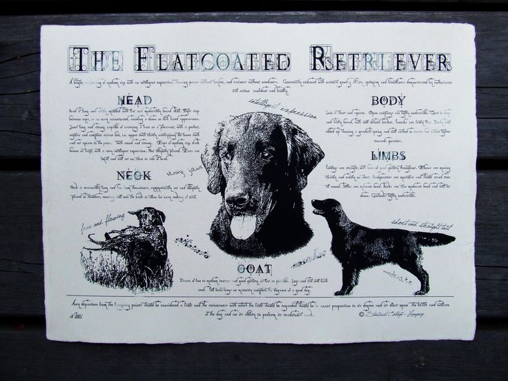 Antique styled dog standard - Flatcoated Retriever by Creativedoglover on Etsy