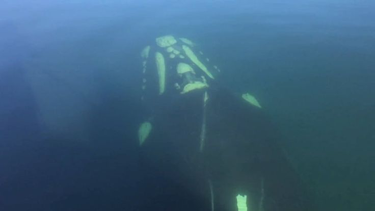 Paddling with Whales on Sydney Harbour
