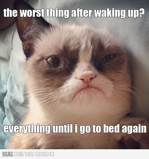 I feel like Me and Grumpy Cat could hang.  You know, aside from the fact that he would probably hate me too.
