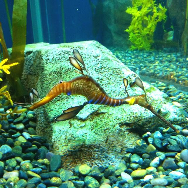 24 best animals at georgia aquarium images on pinterest for Georgia freshwater fish
