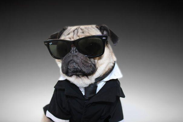 Doug la star des chiens déguisés pour Halloween   doug la star des chiens deguises pour halloween cosplay men in black