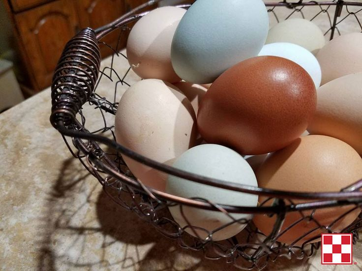 """One of my favorite parts about backyard chickens is their colored eggs! This picture shows a few of my eggs:  •	Creamy, light brown eggs: American Buff Orpingtons and Swedish Flower Hens •	Blue: Ameraucana •	Green: Isbar •	Light blue: Sapphire  •	Dark brown: Marans •	Medium brown: Heritage English Orpington"" – Carol M"
