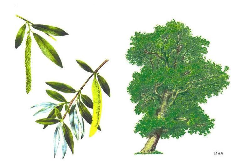 drzewo 9