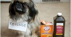 3 remedios caseros para eliminar olor a perro, orina y demás accidentes