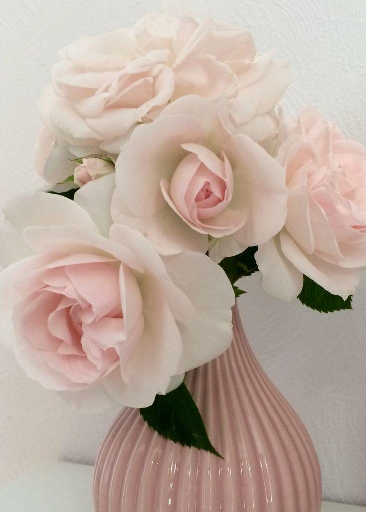 Розы в вазе🌸