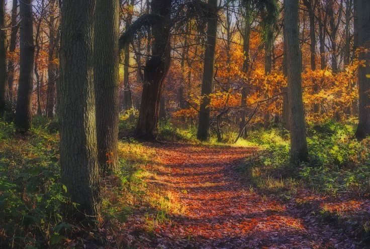 Wyre Forest, Near Bewdley, Worcestershire