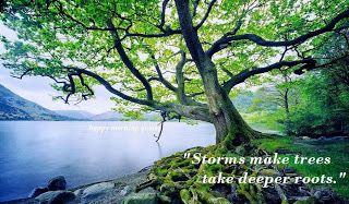 images of storms make trees take deeper roots   Storms make trees take deeper roots!   Happy Morning Quotes