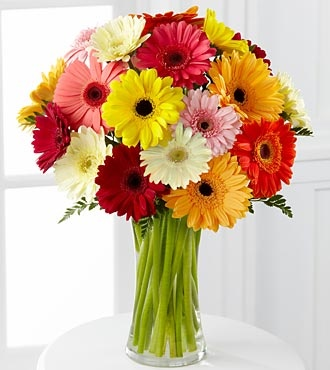 GERBER DAISIES will be planted in your garden somewhere!!.  They bloom all summer long.