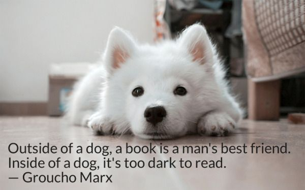 Outside of a dog, a book is a man's best friend. Inside of a dog, it's too dark to read. -- Groucho Marx
