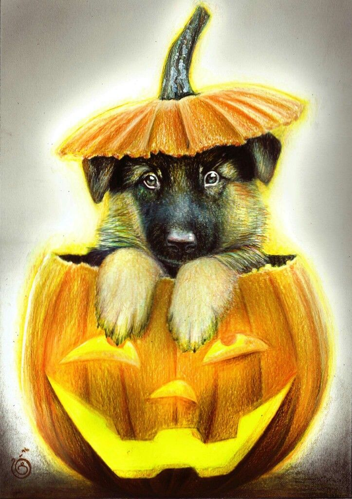 HAPPY HALLOWEEN! :-D :-D <3 <3   Here's a little drawing of a cute german shepherd puppy in a pumpkin made in full color with colored pencils!   Time: 5hours Tools: Colored pencils, tombow mono zero eraserpencil, kneaded eraser Paper: 300gsm A3 Artist: Jennifer Carlsson Country: Sweden