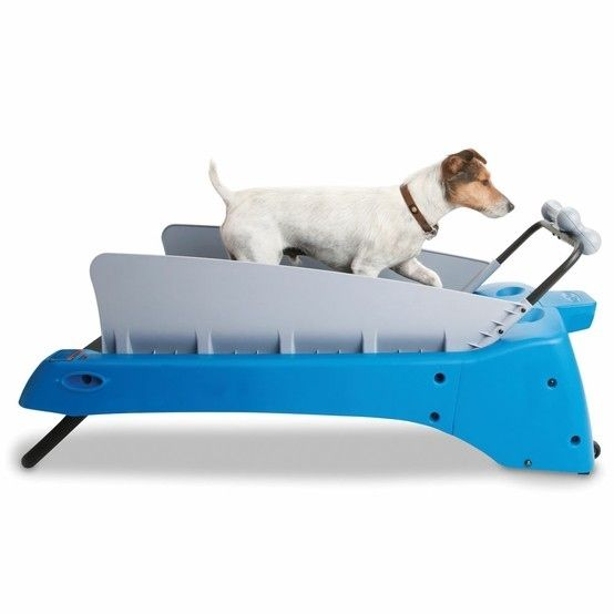 Too lazy to take your dog for a walk?  Get a doggy treadmill and you can sit on the couch forever!