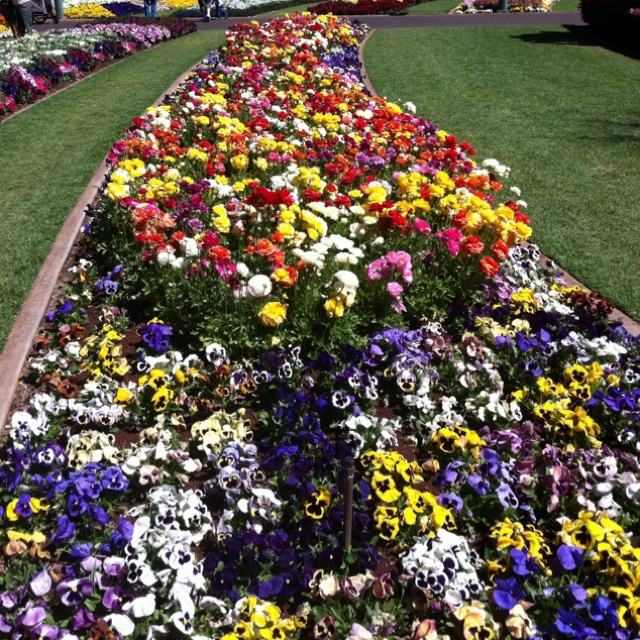 Toowoomba Carnival of Flowers, Queensland