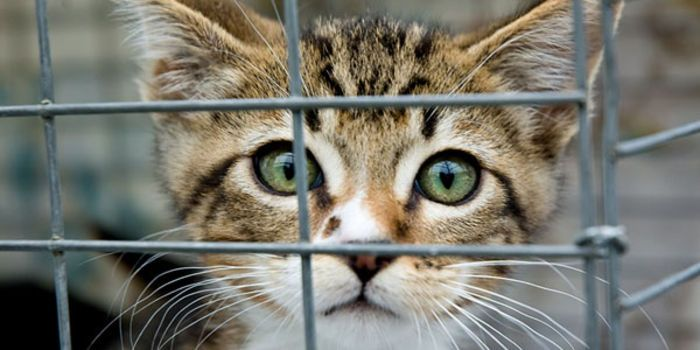 Utah is one of only nine states that still use monoxide gas chambers to dispose of shelter animals.... (10857 signatures on petition)