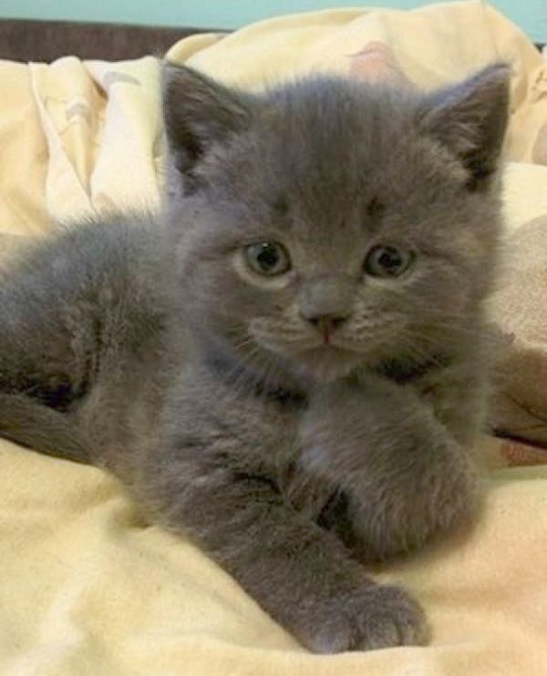 Excellent Cute Cats And Kittens Youtube Katzen