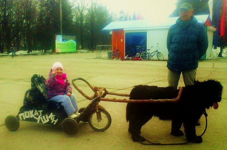 О детях и для детей: Собачья упряжка в центре Ульяновска