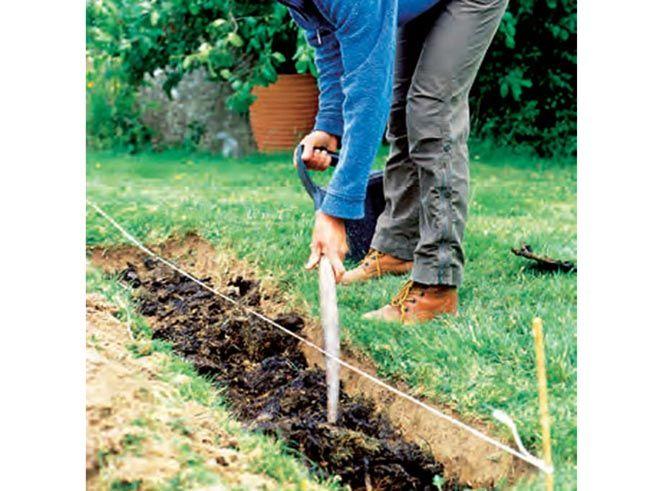 Den beste tiden å plante busker på er om våren eller høsten. Velg hekkplanter som passer til din hage.