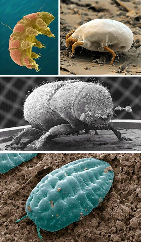 SEM Microscopy via web urbanist