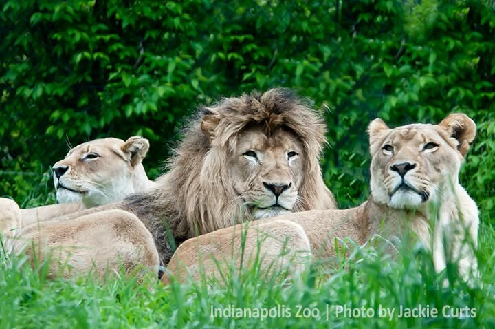 Summer Safari 2014! You could travel with the Zoo through wonderful wildlife in South Africa #ZooTrips #keeprolling